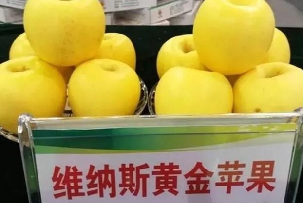 维纳斯黄金苹果苗丽江