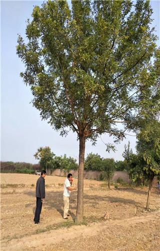 树的茎的结构图