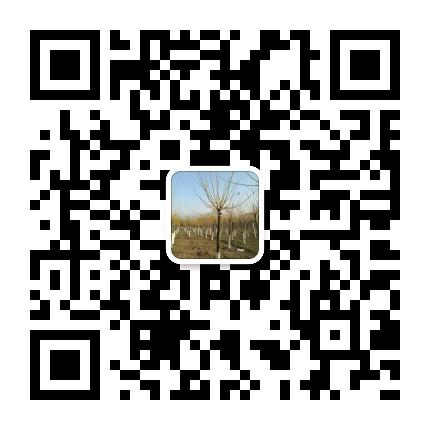 菏泽市牡丹区雨泽苗木种植中心